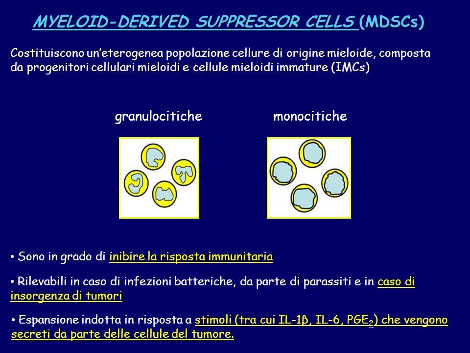 MYELOID-DERIVED SUPPRESSOR CELLS (MDSCs) Costituiscono uneterogenea popolazione cellure di origine mieloide, composta da progenitori cellulari mieloid