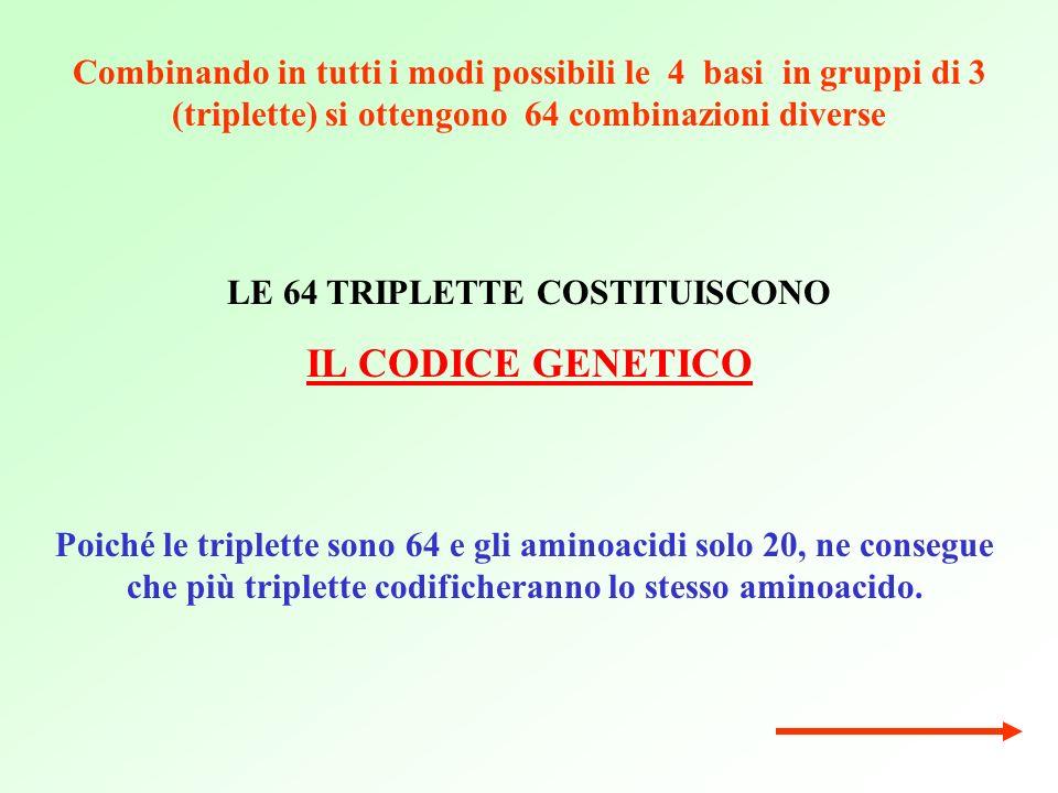 Poiché le triplette sono 64 e gli aminoacidi solo 20, ne consegue che più triplette codificheranno lo stesso aminoacido.