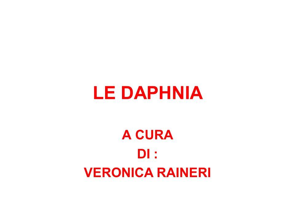 LE DAPHNIA A CURA DI : VERONICA RAINERI