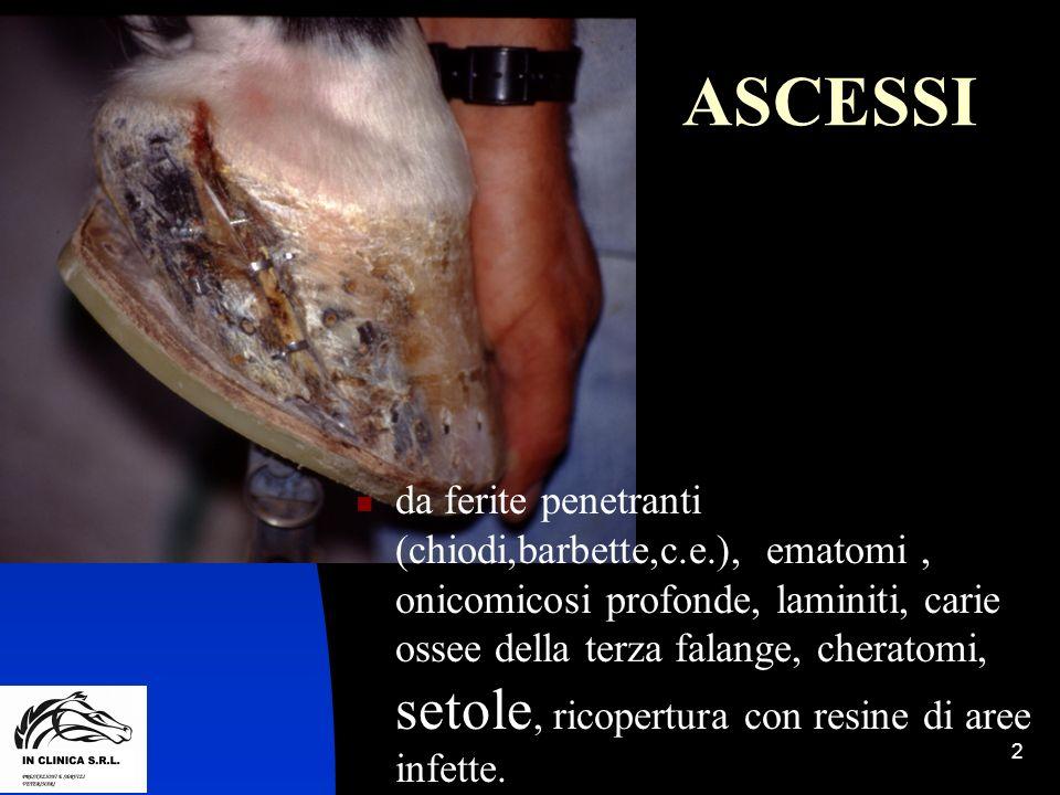 2 ASCESSI da ferite penetranti (chiodi,barbette,c.e.), ematomi, onicomicosi profonde, laminiti, carie ossee della terza falange, cheratomi, setole, ri