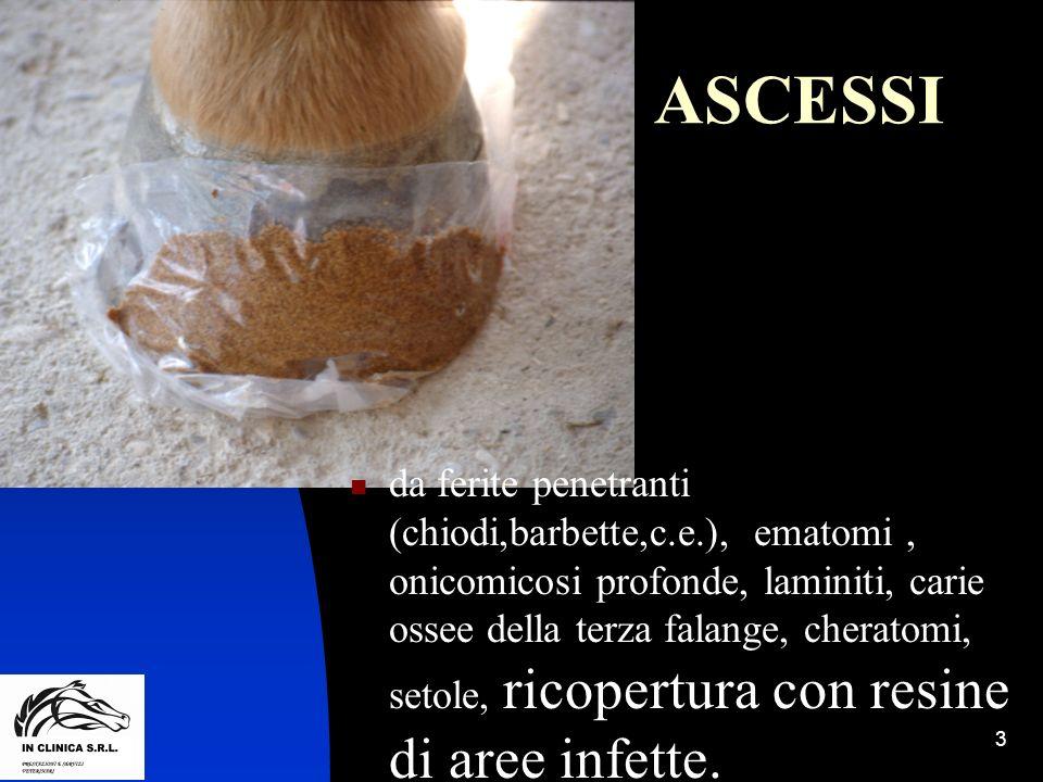 3 ASCESSI da ferite penetranti (chiodi,barbette,c.e.), ematomi, onicomicosi profonde, laminiti, carie ossee della terza falange, cheratomi, setole, ri