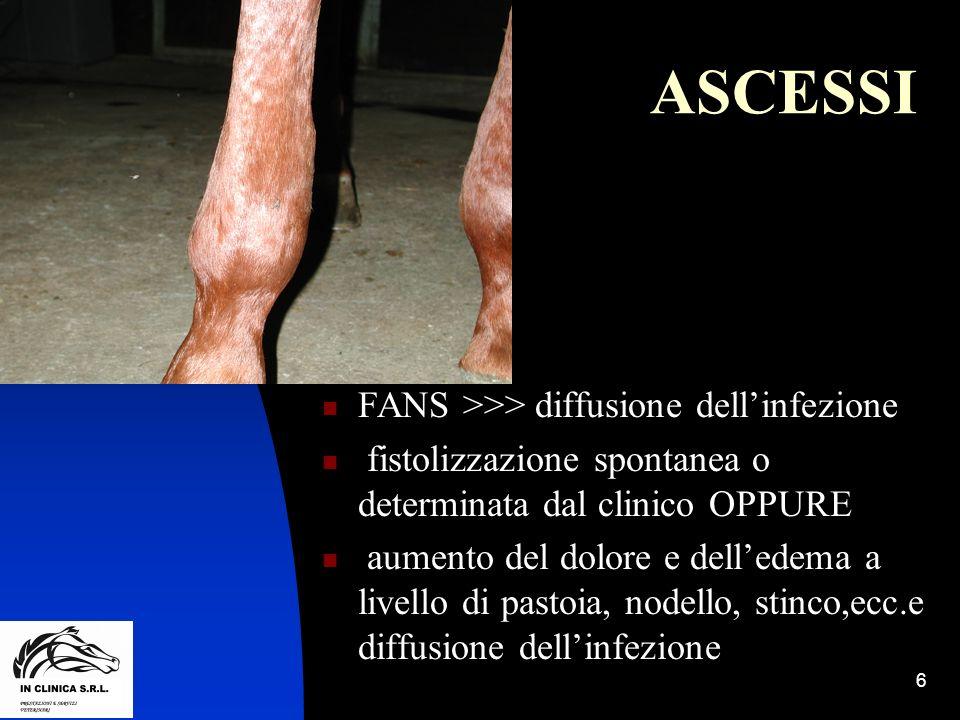 7 ASCESSI Ascessi mediali o laterali a glomi o talloni >> edema mediale o laterale iperemia cutanea in aree di cute depigmentata e talora previa tricotomia.
