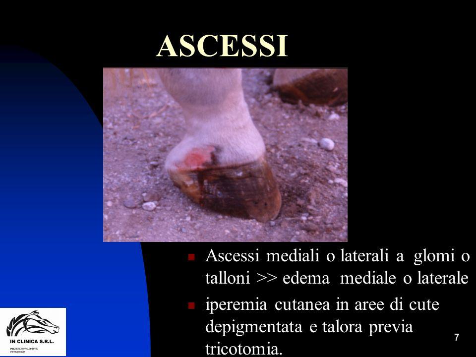 7 ASCESSI Ascessi mediali o laterali a glomi o talloni >> edema mediale o laterale iperemia cutanea in aree di cute depigmentata e talora previa trico