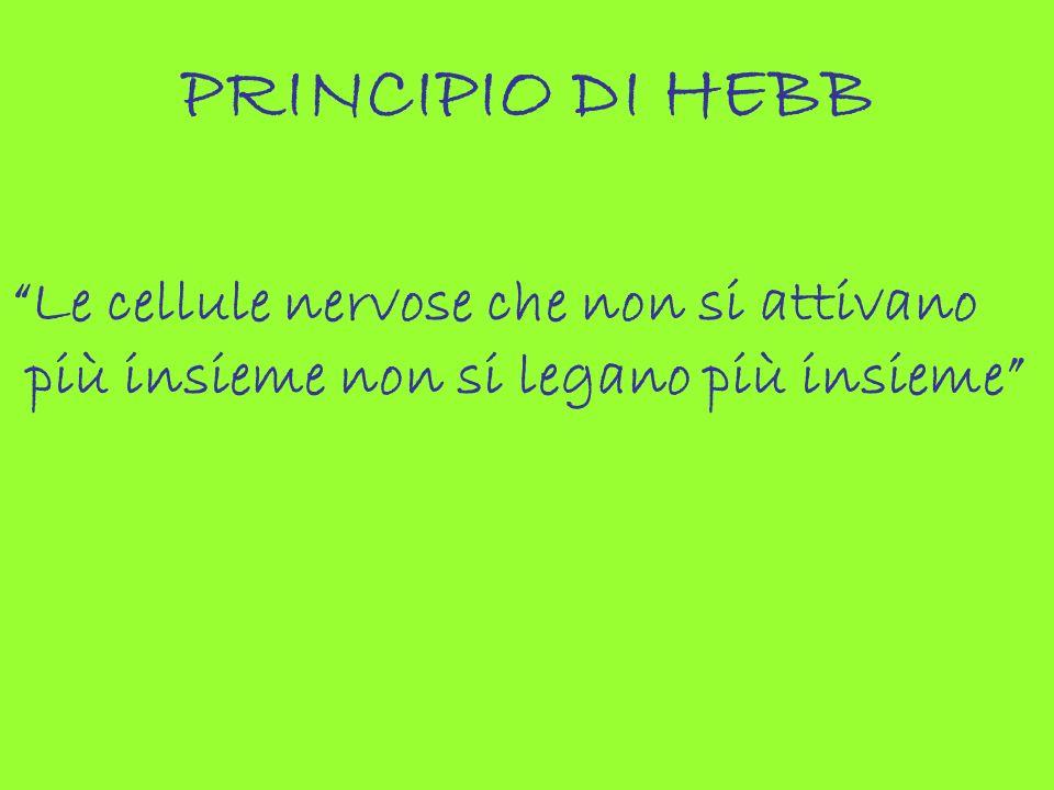 PRINCIPIO DI HEBB Le cellule nervose che non si attivano più insieme non si legano più insieme