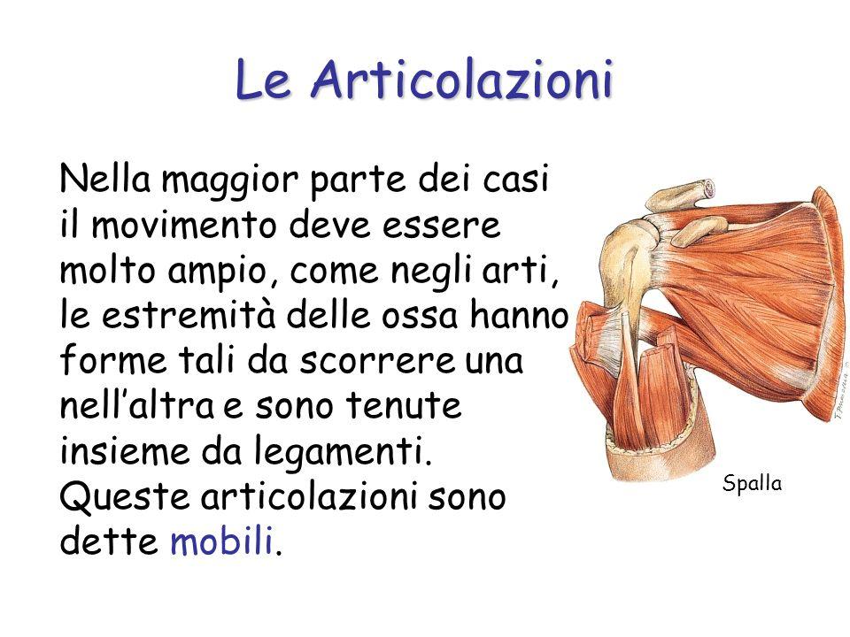 Nella maggior parte dei casi il movimento deve essere molto ampio, come negli arti, le estremità delle ossa hanno forme tali da scorrere una nellaltra e sono tenute insieme da legamenti.