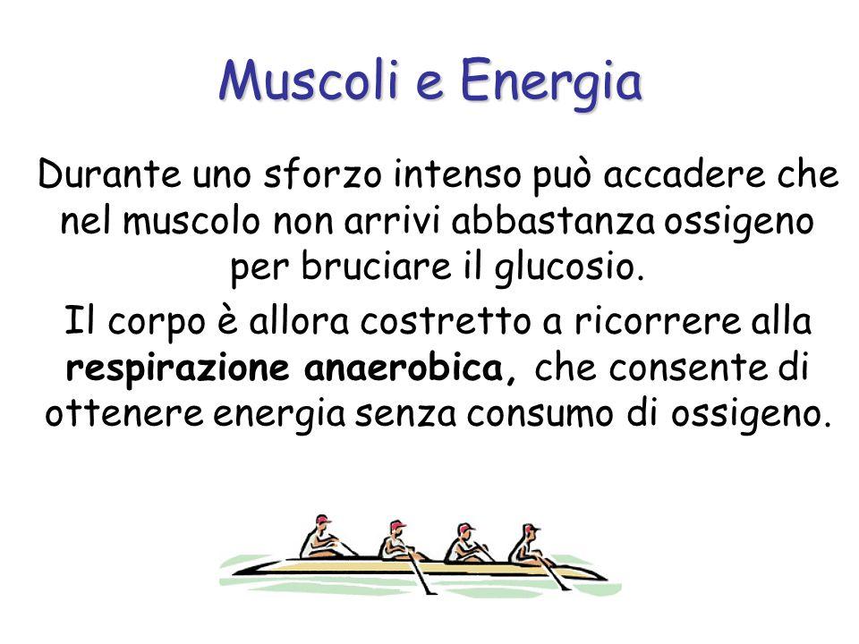 Durante uno sforzo intenso può accadere che nel muscolo non arrivi abbastanza ossigeno per bruciare il glucosio. Il corpo è allora costretto a ricorre