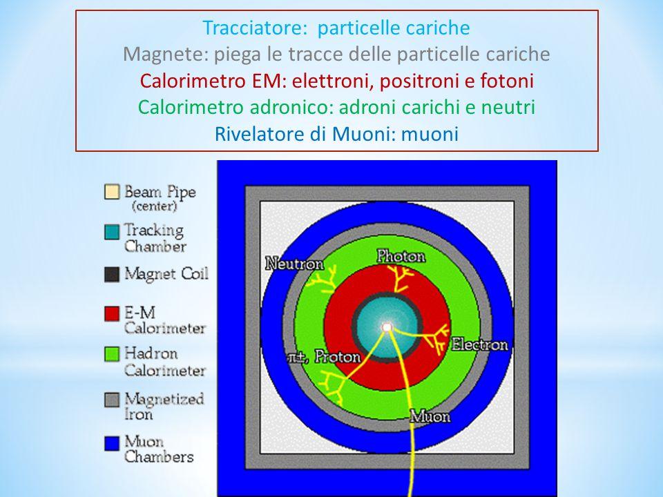 Tracciatore: particelle cariche Magnete: piega le tracce delle particelle cariche Calorimetro EM: elettroni, positroni e fotoni Calorimetro adronico: adroni carichi e neutri Rivelatore di Muoni: muoni