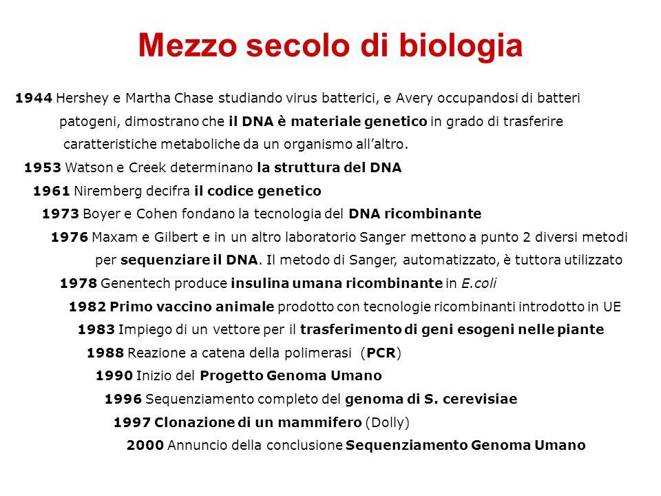 Mezzo secolo di biologia 1944 Hershey e Martha Chase studiando virus batterici, e Avery occupandosi di batteri patogeni, dimostrano che il DNA è mater