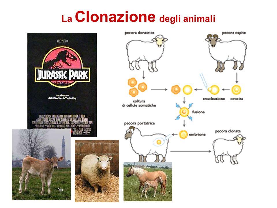 La Clonazione degli animali