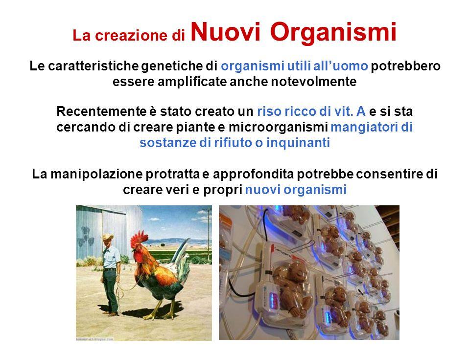 La creazione di Nuovi Organismi Le caratteristiche genetiche di organismi utili alluomo potrebbero essere amplificate anche notevolmente Recentemente