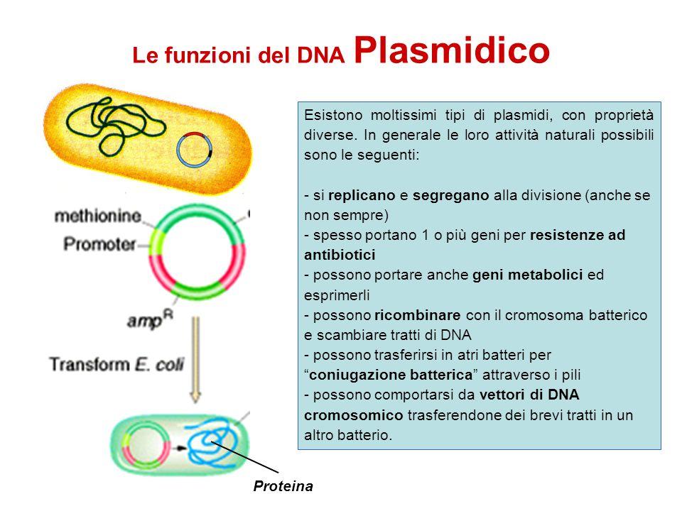 Le funzioni del DNA Plasmidico Esistono moltissimi tipi di plasmidi, con proprietà diverse. In generale le loro attività naturali possibili sono le se