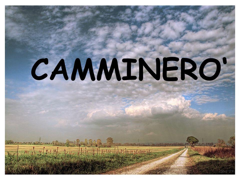 CAMMINERO