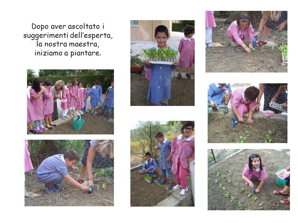 Dopo aver ascoltato i suggerimenti dellesperta, la nostra maestra, iniziamo a piantare.