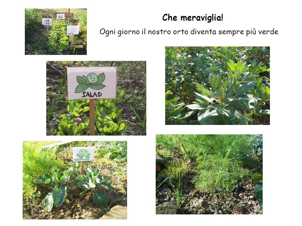 Che meraviglia! Ogni giorno il nostro orto diventa sempre più verde