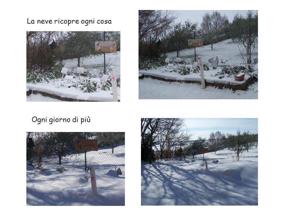 La neve ricopre ogni cosa Ogni giorno di più