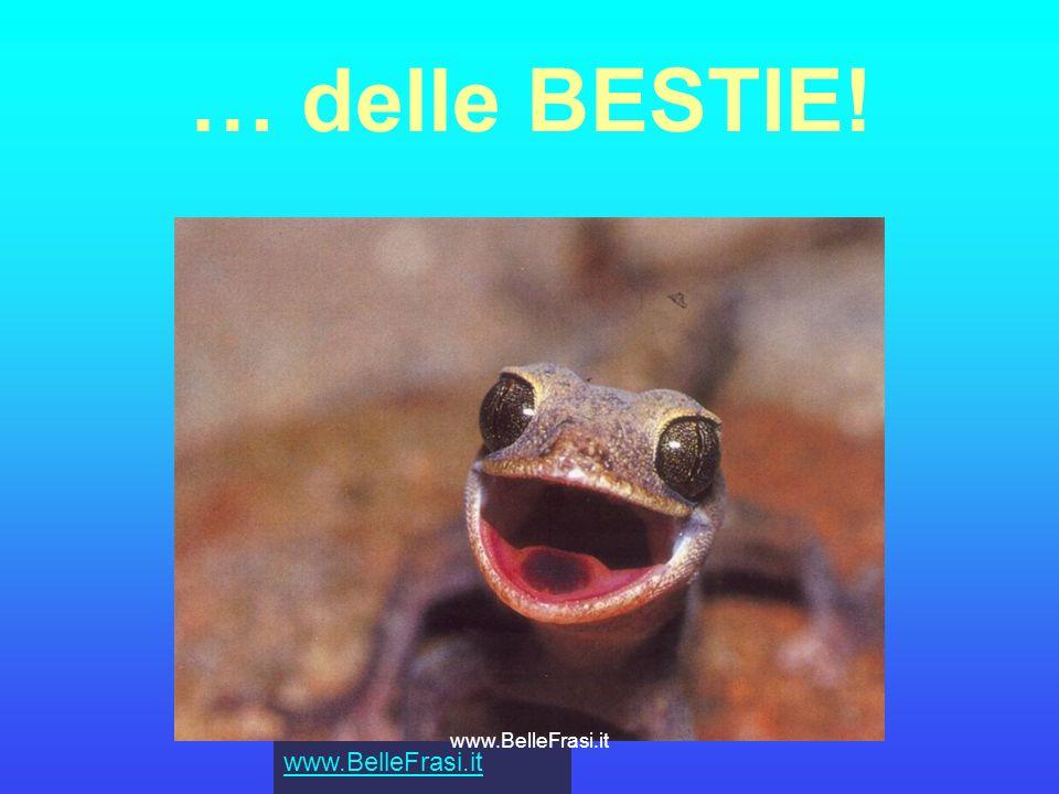 … delle BESTIE! www.BelleFrasi.it