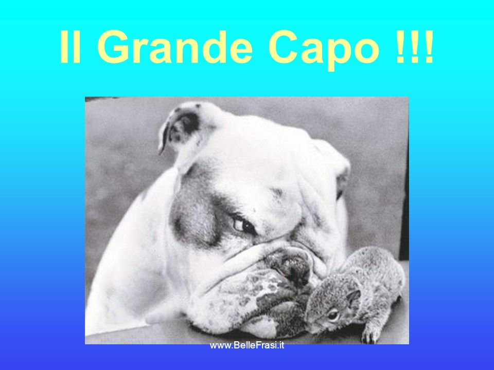 Il Grande Capo !!! www.BelleFrasi.it