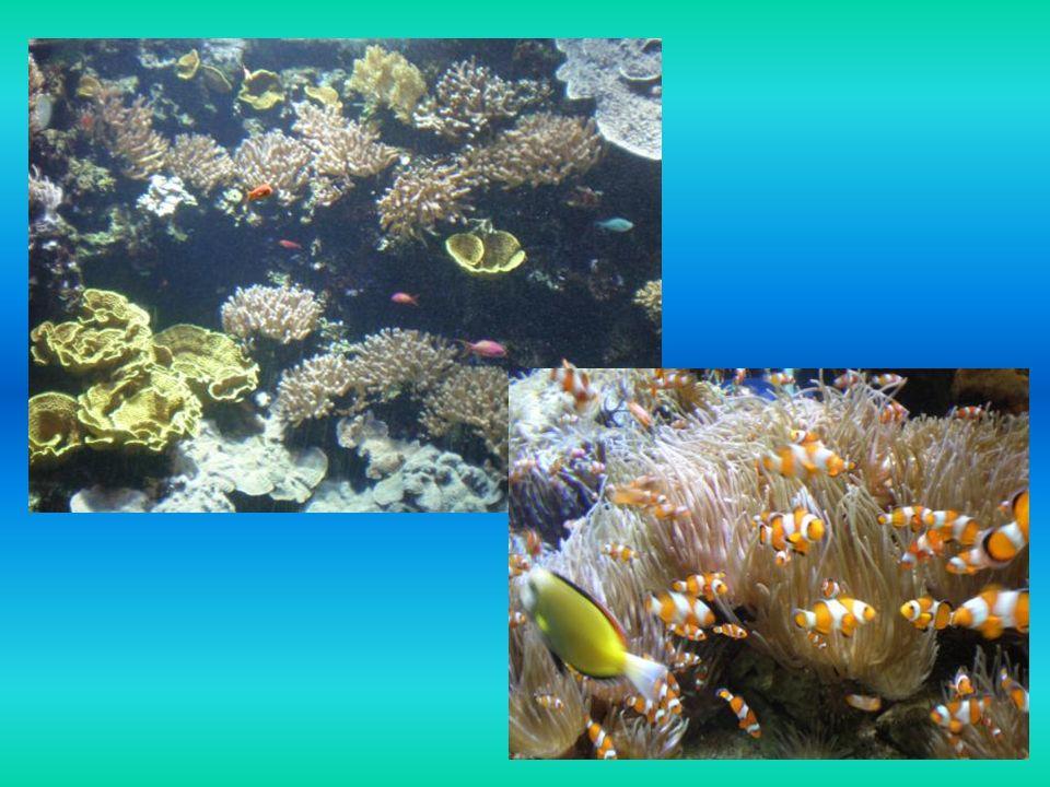 E siamo andati al Museo Oceanografico di Montecarlo