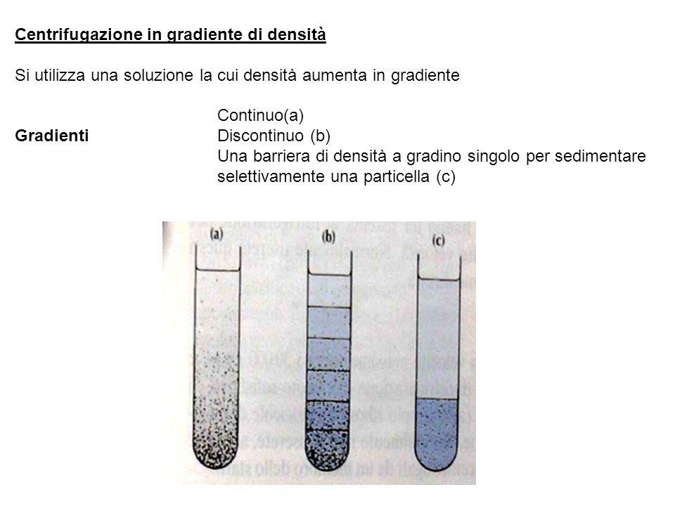 Centrifugazione in gradiente di densità Si utilizza una soluzione la cui densità aumenta in gradiente Continuo(a) Gradienti Discontinuo (b) Una barriera di densità a gradino singolo per sedimentare selettivamente una particella (c)