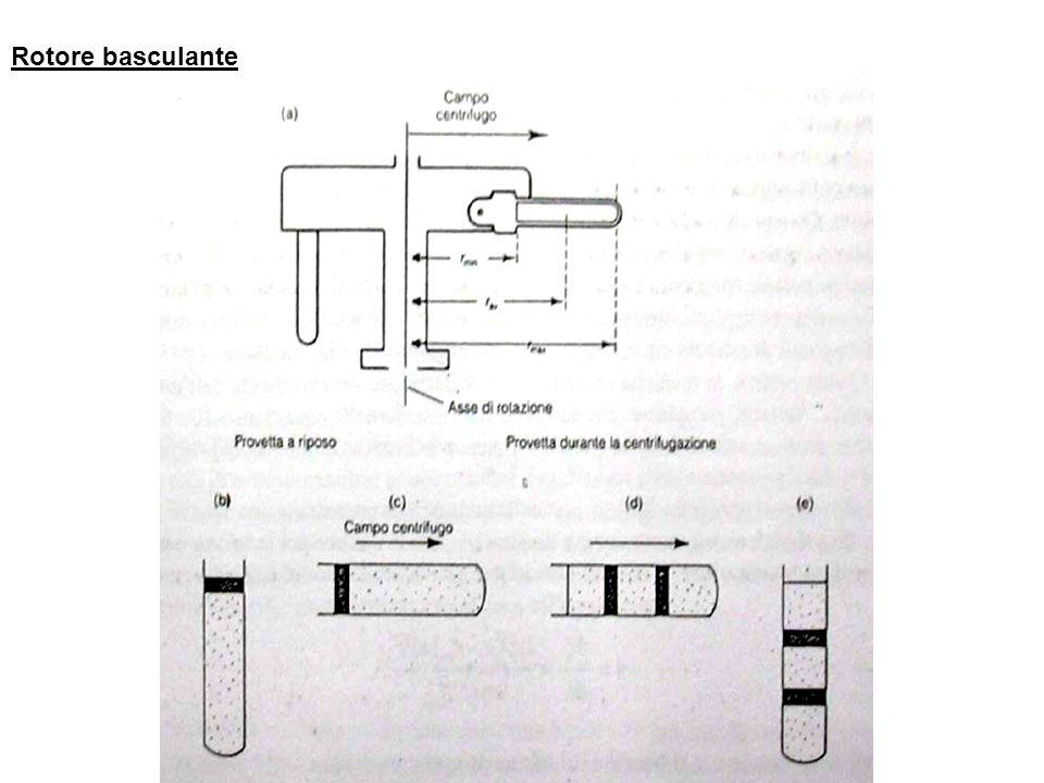 Principi base della sedimentazione La velocità di sedimentazione dipende dal campo centrifugo G, diretto radicalmente verso lesterno.