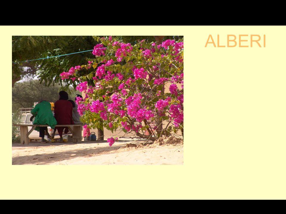 ALBERI G