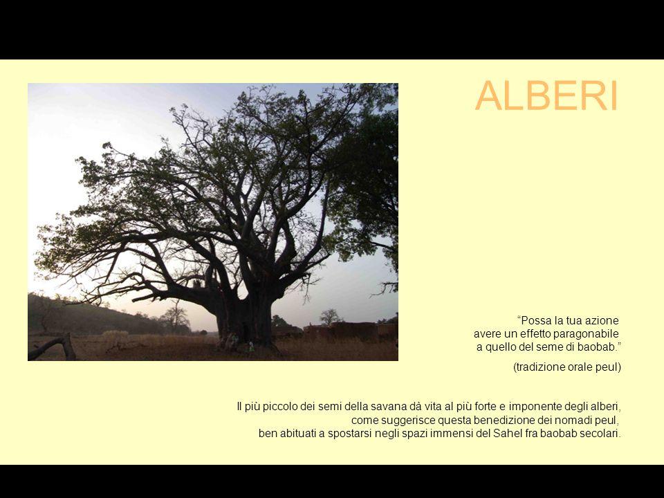 Possa la tua azione avere un effetto paragonabile a quello del seme di baobab.
