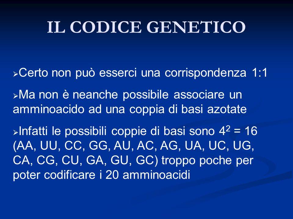 IL CODICE GENETICO Certo non può esserci una corrispondenza 1:1 Ma non è neanche possibile associare un amminoacido ad una coppia di basi azotate Infa