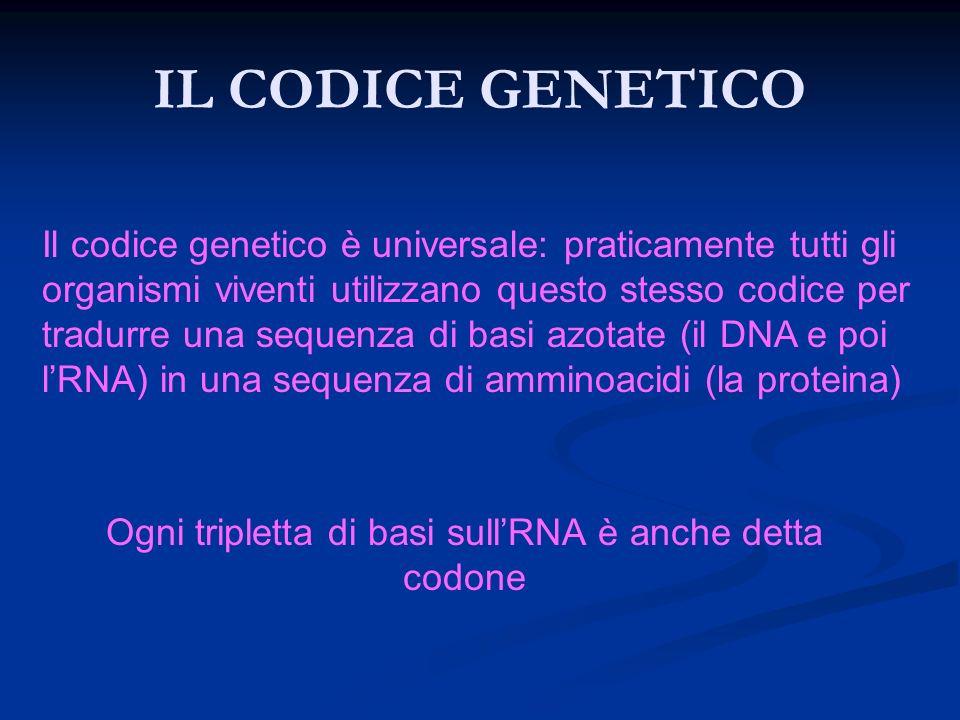 IL CODICE GENETICO Il codice genetico è universale: praticamente tutti gli organismi viventi utilizzano questo stesso codice per tradurre una sequenza