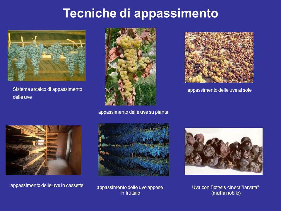 Tecniche di appassimento Sistema arcaico di appassimento delle uve appassimento delle uve su pianta appassimento delle uve in cassette appassimento de
