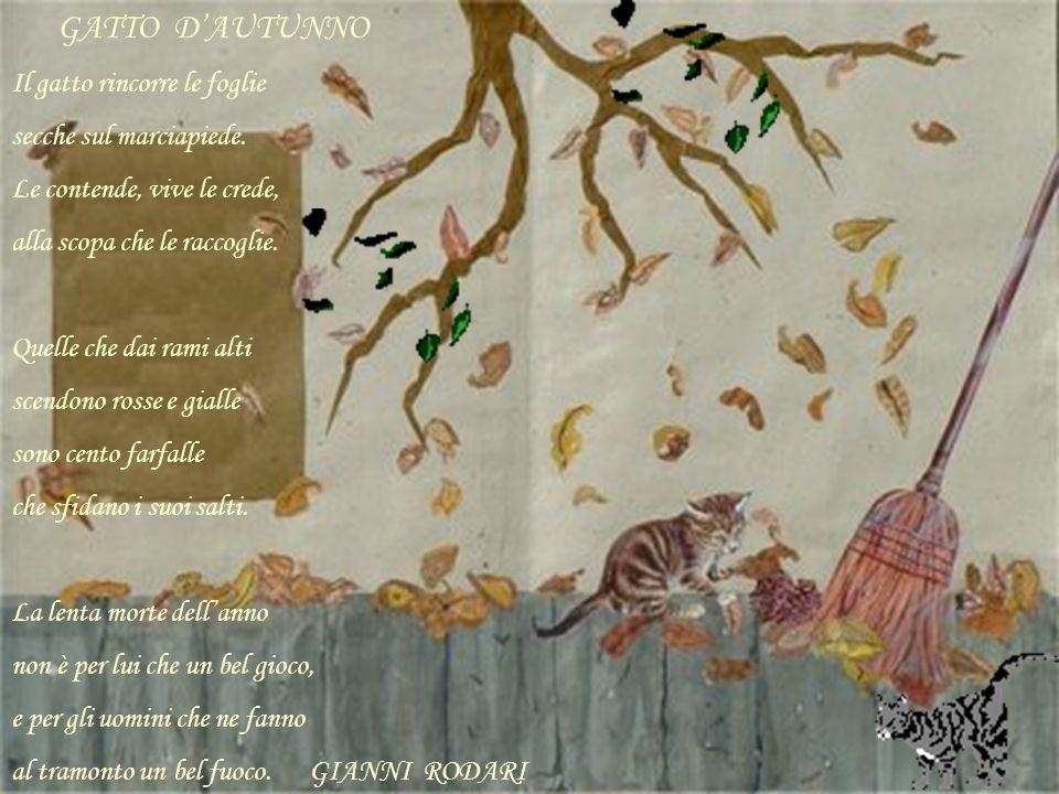 GATTO DAUTUNNO Il gatto rincorre le foglie secche sul marciapiede. Le contende, vive le crede, alla scopa che le raccoglie. Quelle che dai rami alti s