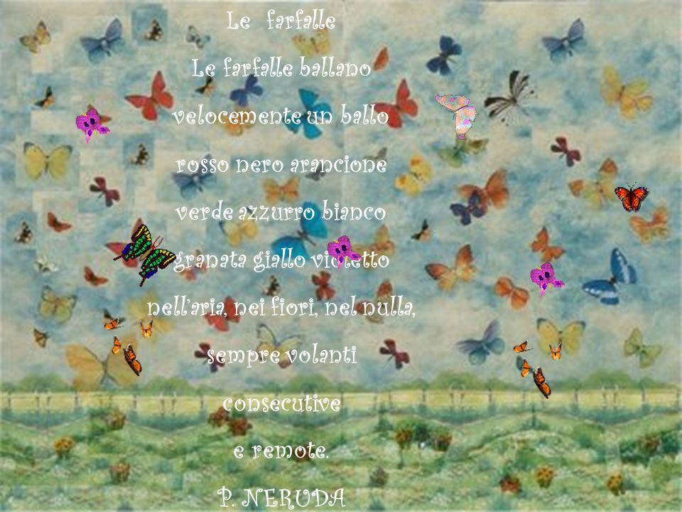 Le farfalle Le farfalle ballano velocemente un ballo rosso nero arancione verde azzurro bianco granata giallo violetto nellaria, nei fiori, nel nulla,