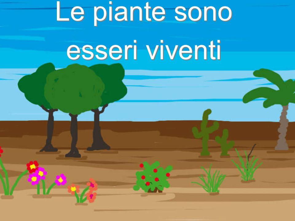 Le piante sono esseri viventi Le piante sono esseri viventi