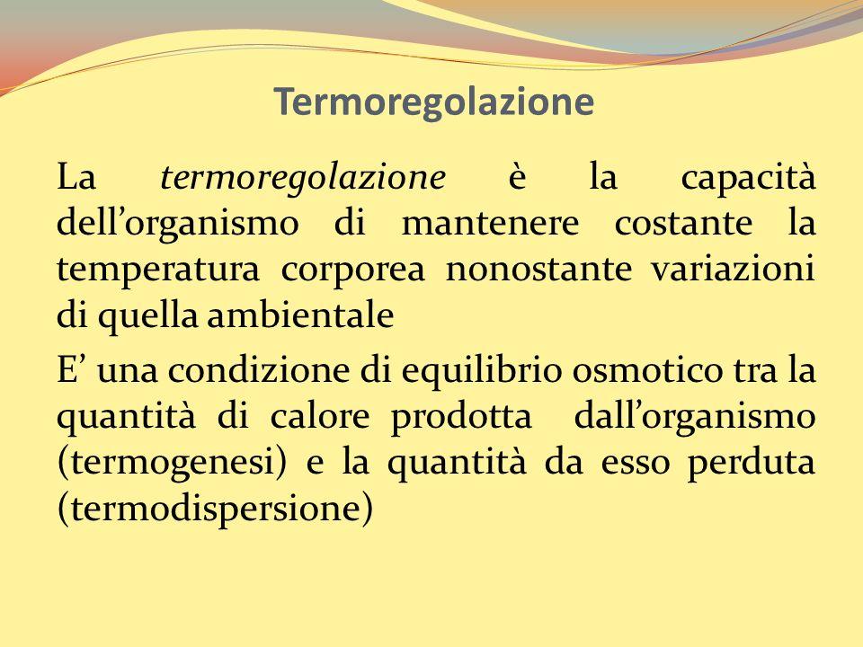 Termoregolazione La termoregolazione è la capacità dellorganismo di mantenere costante la temperatura corporea nonostante variazioni di quella ambient