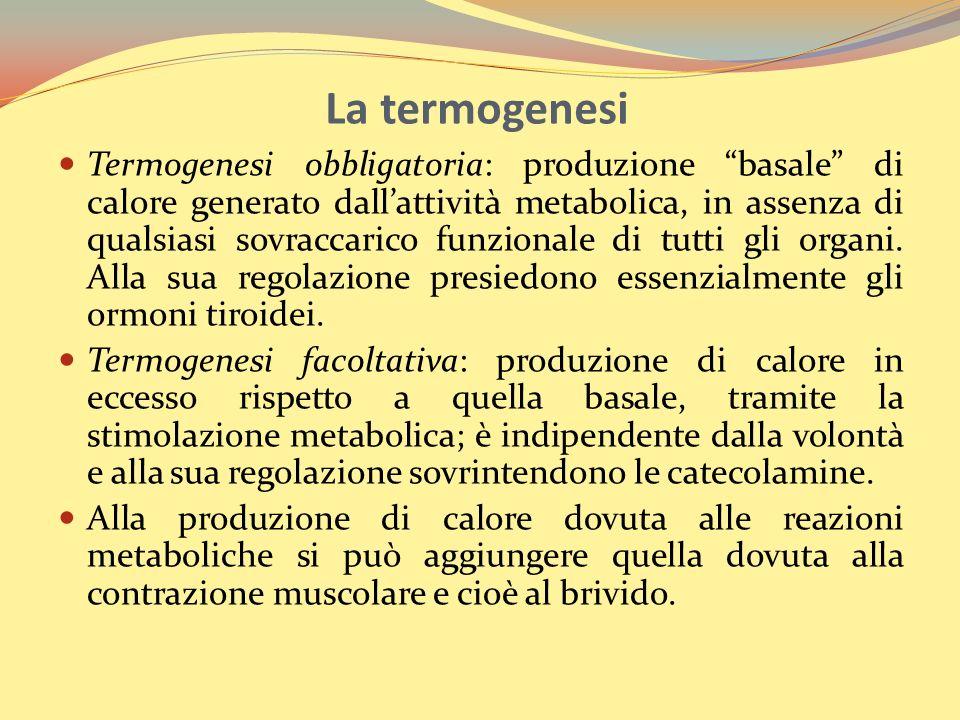 La termogenesi La produzione di calore deriva dalla trasformazione dellenergia chimica presente negli alimenti (soprattutto carboidrati e lipidi) Una parte è immagazzinata sotto forma di legami energetici nella molecola di ATP La trasformazione dellenergia chimica in calorica avviene tramite le ATPasi (trasformazione di ATP in ADP) La termogenesi è un processo involontario a cui presiedono: Ormoni (tiroidei, adrenalina e glicocorticoidi) Contrazione muscolare: muscoli volontari (lavoro muscolare) e muscoli involontari (brividi)