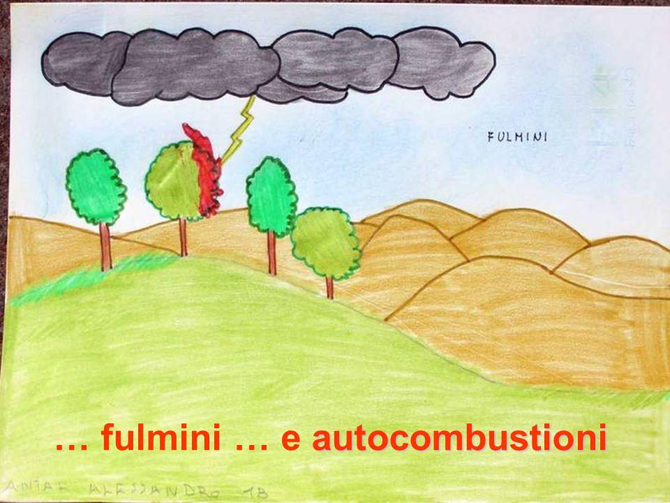 Sono considerate CAUSE ACCIDENTALI quelle dovute a incidenti non determinati da azioni umane faville provenienti da incendi più o meno lontani