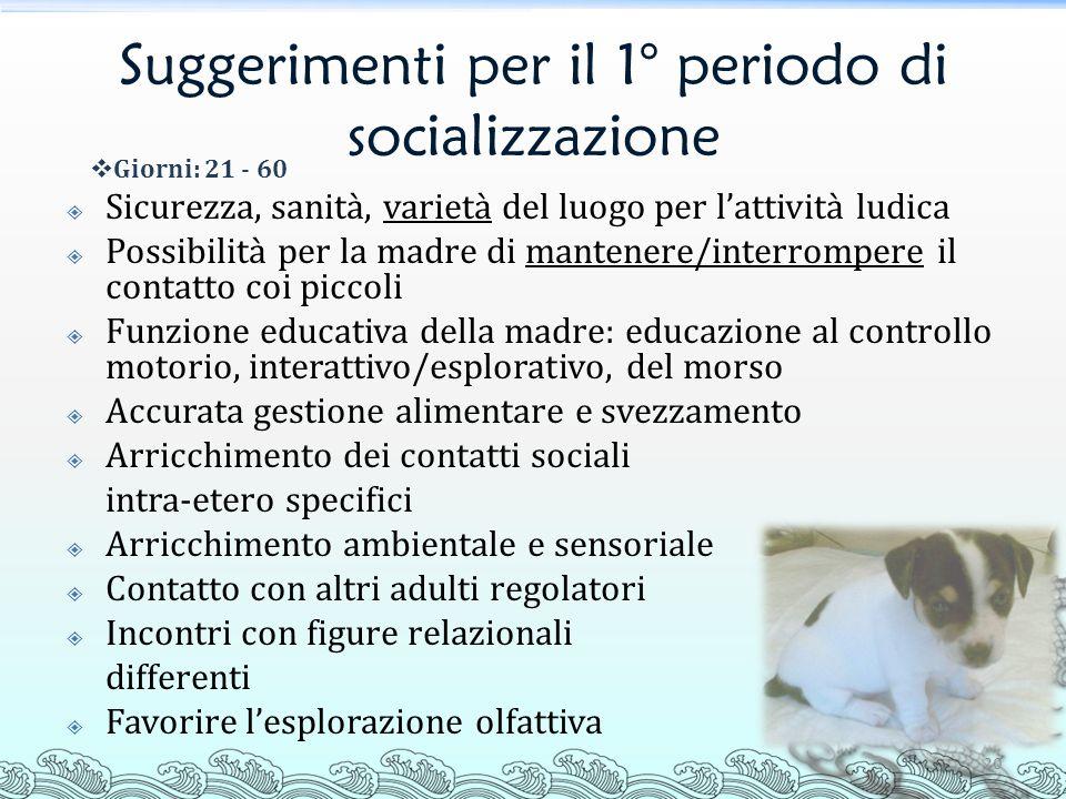 Suggerimenti per il 1° periodo di socializzazione 20 Sicurezza, sanità, varietà del luogo per lattività ludica Possibilità per la madre di mantenere/i
