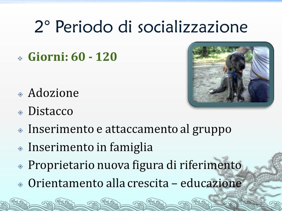 2° Periodo di socializzazione 22 Giorni: 60 - 120 Adozione Distacco Inserimento e attaccamento al gruppo Inserimento in famiglia Proprietario nuova fi