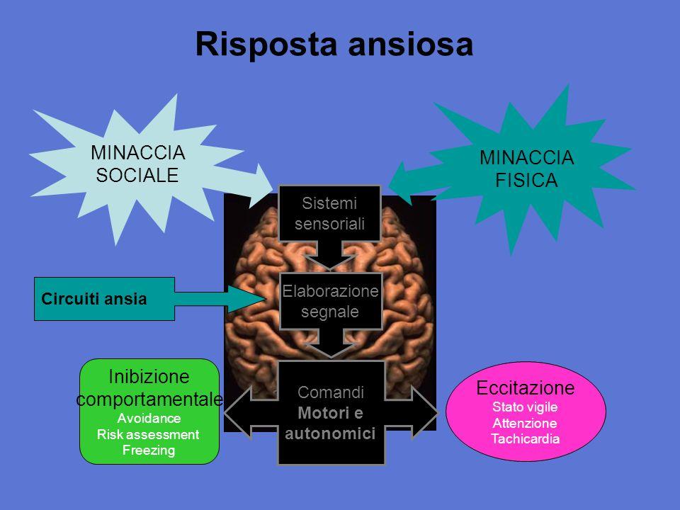 Serotonin 1AR-KO: il topo ansioso Possono difetti nei circuiti serotonergici essere coinvolti nellansia?