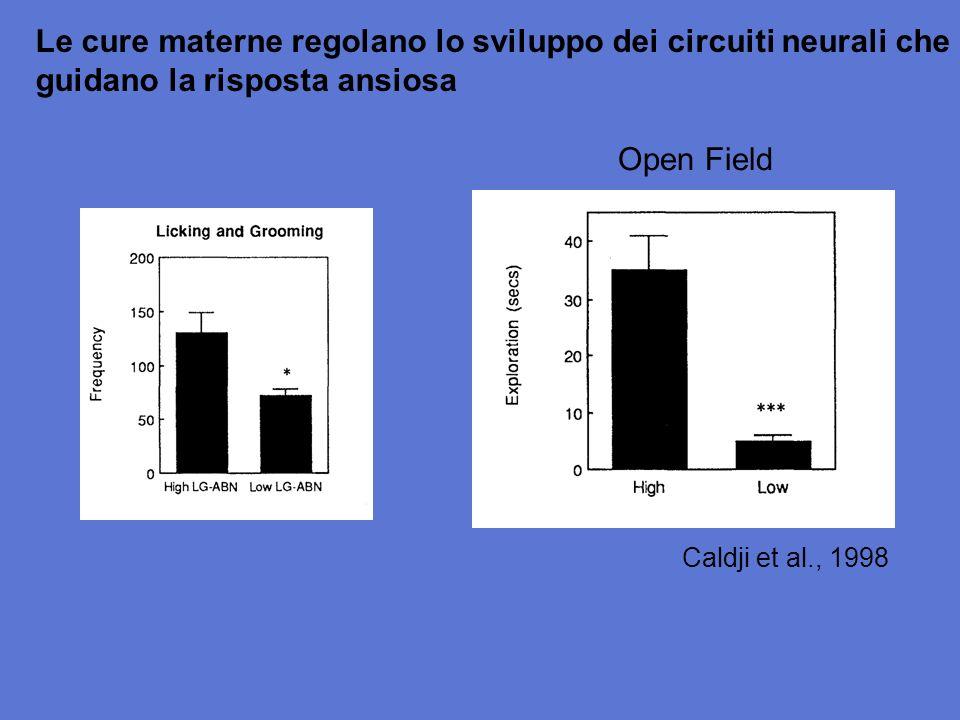 Caldji et al., 1998 Le cure materne regolano lo sviluppo dei circuiti neurali che guidano la risposta ansiosa Open Field
