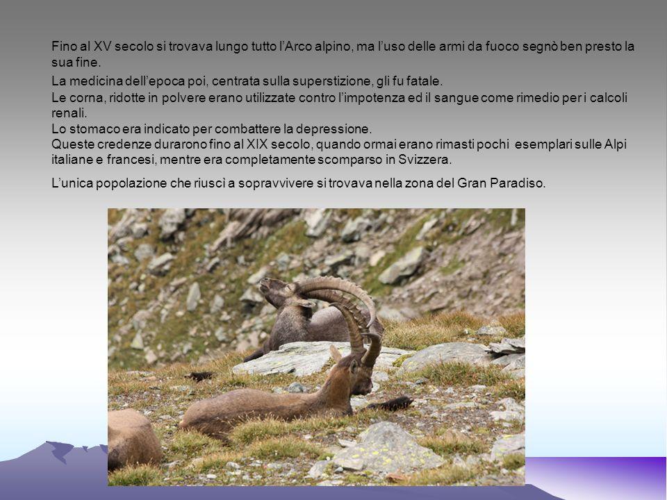 BIBLIOGRAFIA Regione Piemonte – I selvatici delle Alpi Piemontesi Biologia e gestione – Ed.