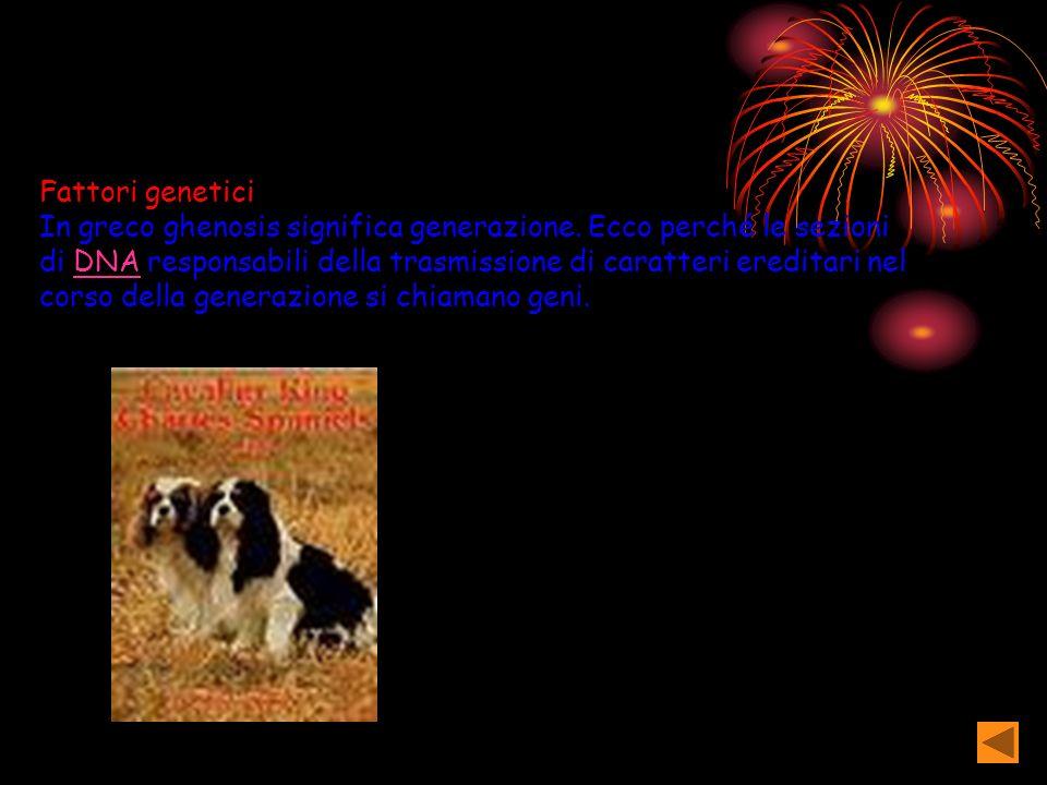 Fattori genetici In greco ghenosis significa generazione.