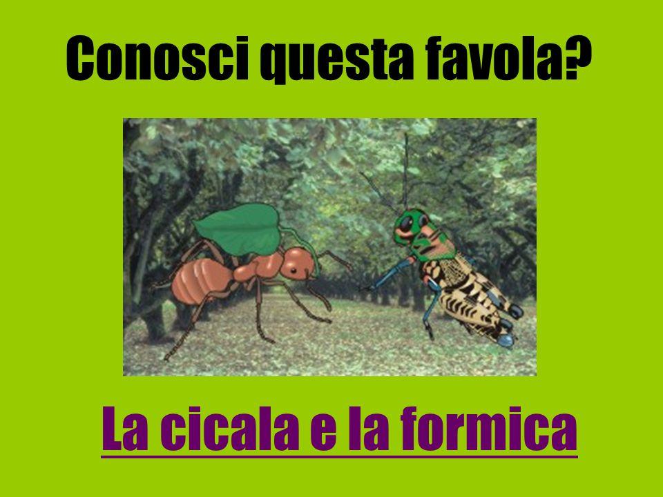 Conosci questa favola? La cicala e la formica