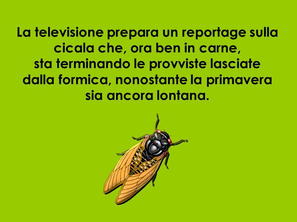 La televisione prepara un reportage sulla cicala che, ora ben in carne, sta terminando le provviste lasciate dalla formica, nonostante la primavera si
