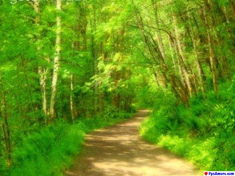 Nulla è più soave e nulla è più forte dellacqua che avanza decisamente e lentamente, consapevole di avere lo stesso destino delluomo: quello di andare avanti.