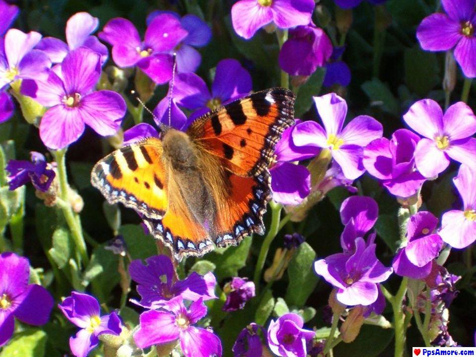 Siamo flessibili come i fiori, come le farfalle...