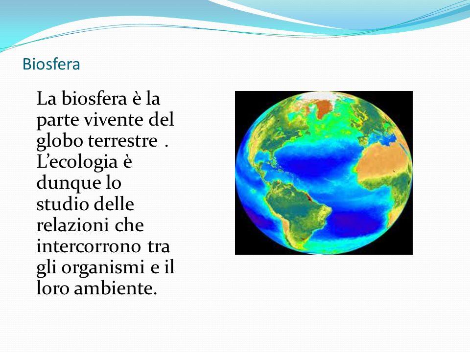 Biosfera La biosfera è la parte vivente del globo terrestre. Lecologia è dunque lo studio delle relazioni che intercorrono tra gli organismi e il loro