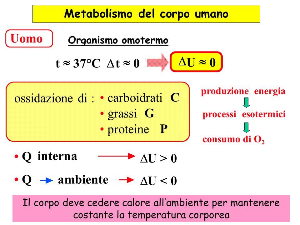Uomo t 37°C t 0 U 0 processi esotermici produzione energia ossidazione di : carboidrati C grassi G proteine P Metabolismo del corpo umano Organismo om