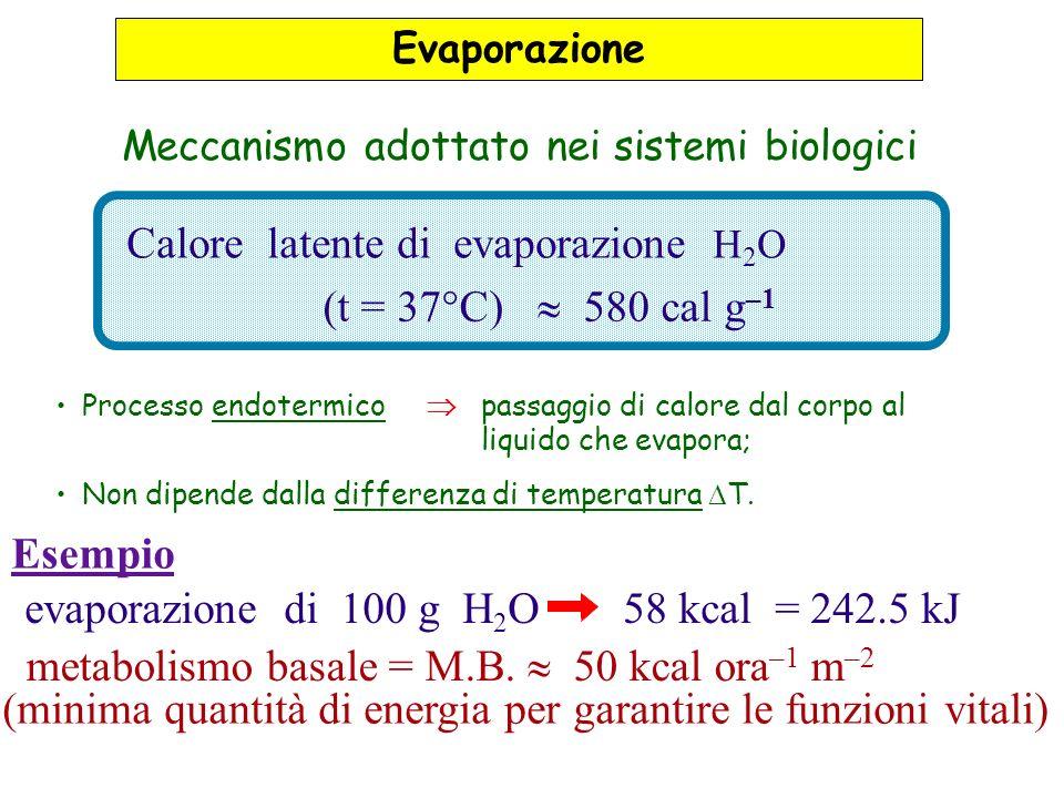 Calore latente di evaporazione H 2 O (t = 37°C) 580 cal g –1 evaporazione di 100 g H 2 O58 kcal = 242.5 kJ Esempio metabolismo basale = M.B. 50 kcal o