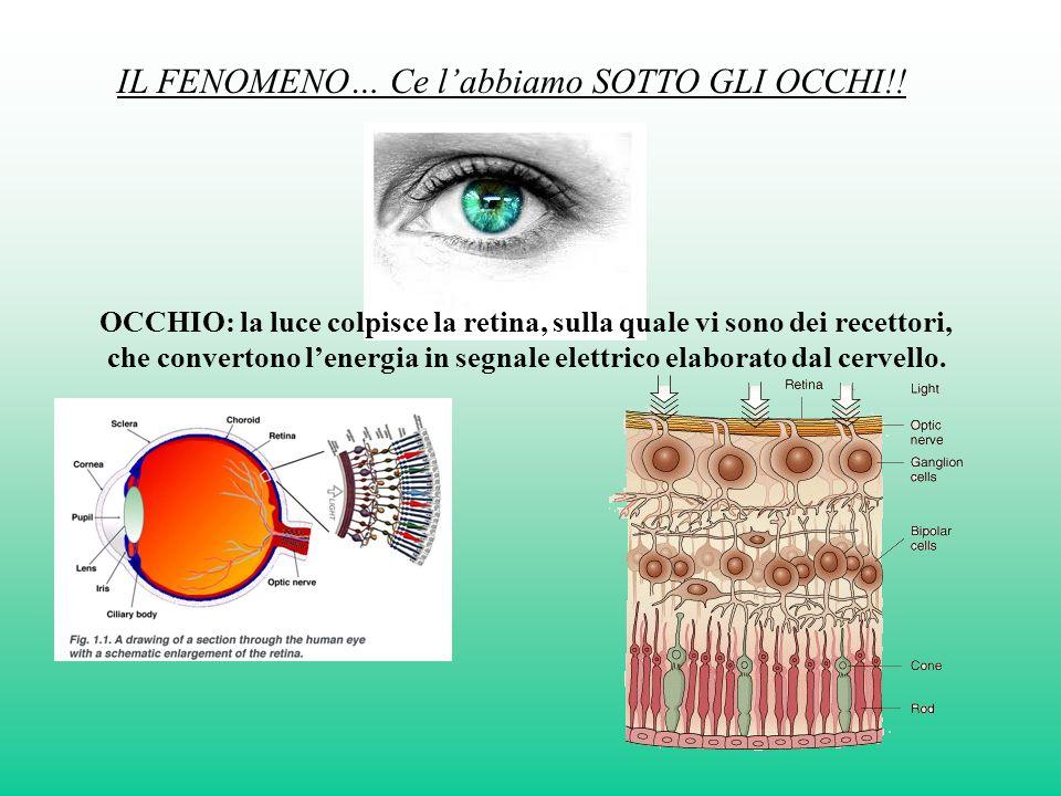 IL FENOMENO… Ce labbiamo SOTTO GLI OCCHI!! OCCHIO: la luce colpisce la retina, sulla quale vi sono dei recettori, che convertono lenergia in segnale e