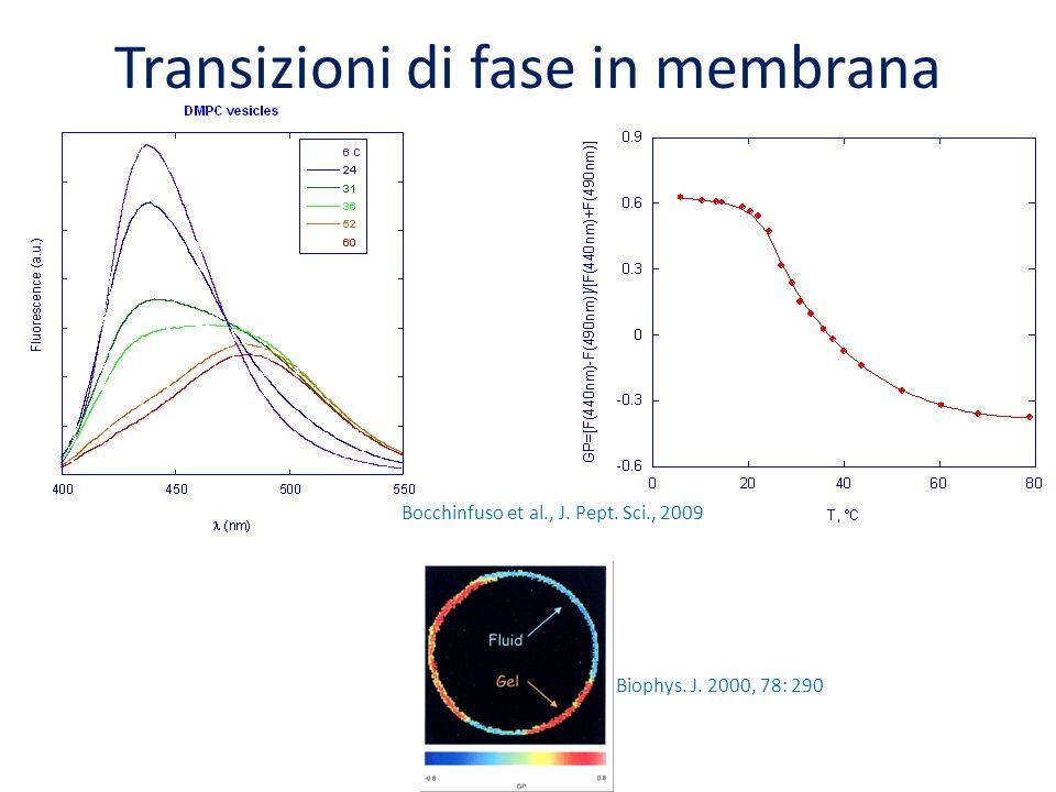 Biophys. J. 2000, 78: 290 Bocchinfuso et al., J. Pept. Sci., 2009